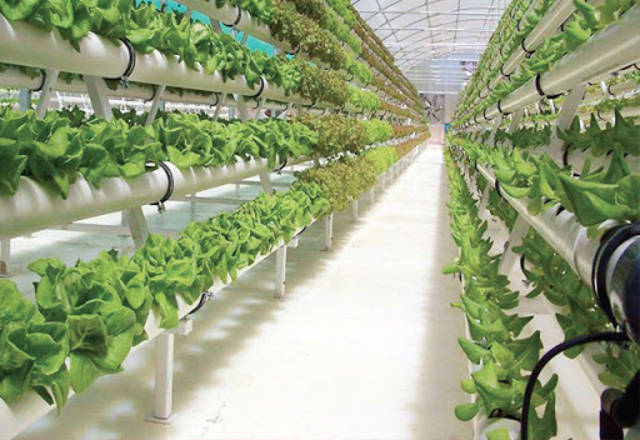 Madar Farms partners with Abu Dhabi Investment to enhance food security