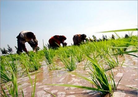 الإمارات تمول زراعة نصف مليون فدان من الأراضي في مصر