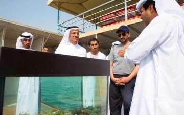 مشروع إماراتي يتصدر استزراع وإنتاج اللؤلؤ في المنطقة