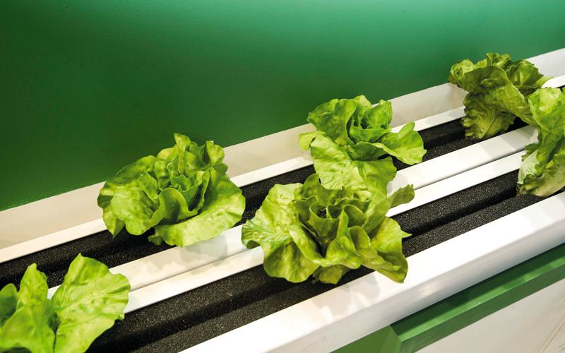 «مدار»: 12 مزرعة ذكية في دبي بحلول سبتمبر المقبل