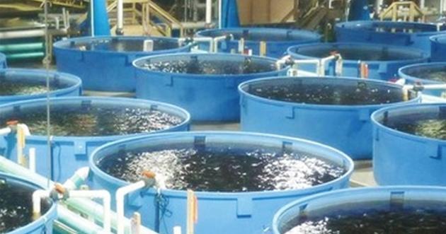 مباحثات إماراتية مصرية لإنشاء أكبر مزرعة سمكية في العالم